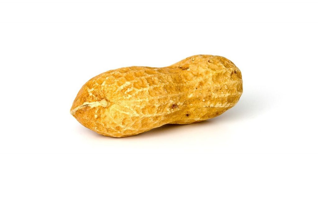 peanut, peanuts, nut-1750.jpg